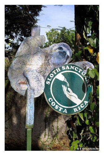 Visit the Sloth Sanctuary in Costa Rica.