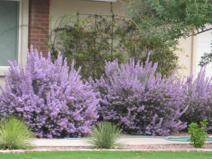 Best 25+ Desert plants ideas on Pinterest | Desert landscaping backyard,  Low water landscaping and Low maintenance plants - Best 25+ Desert Plants Ideas On Pinterest Desert Landscaping