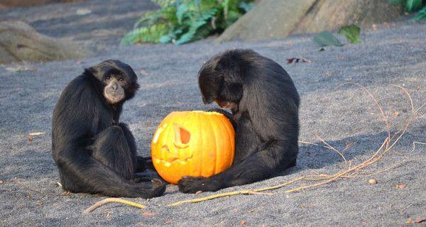 Halloween da brividi al bioparco Zoom Torino: eventi e promozioni per le famiglie