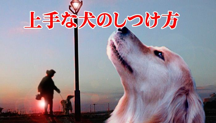 上手な犬のしつけ方  あなたは、飼い犬をコントロールできていますか?