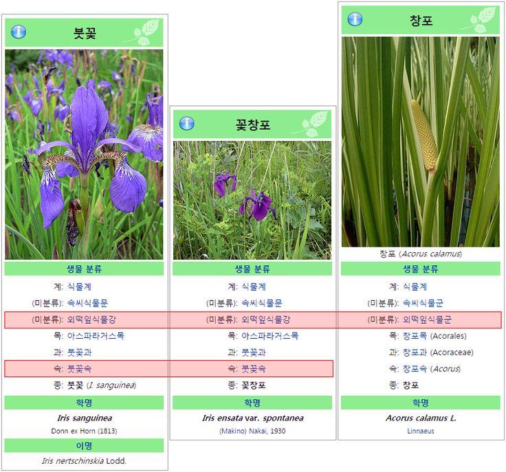 붓꽃-꽃창포-창포 비교