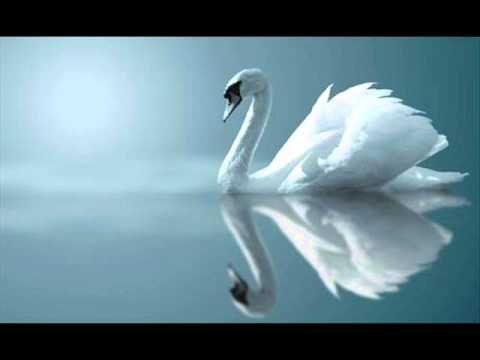 Claude Debussy : Clair de Lune, for Piano (Suite Bergamasque No. 3), L. 75/3  Performed by Kun Woo Paik