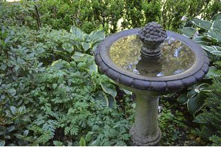 1000 ideas about concrete bird bath on pinterest bird - What kind of paint do you use in a bathroom ...