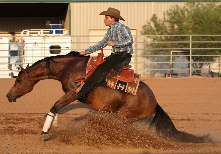images of reining horses | Arabian Reining Horse Association :: Arabian Horses, Stallions, Farms ...