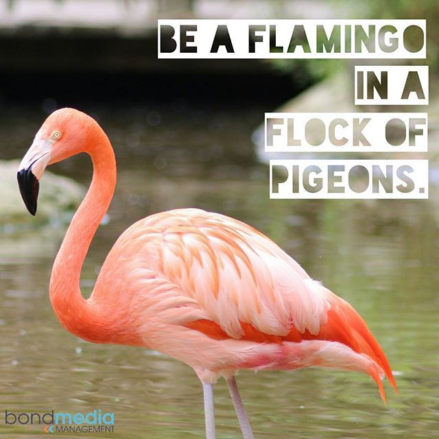 Be a Flamingo in a Flock of Pigeons  For more......... follow me on Instagram xx