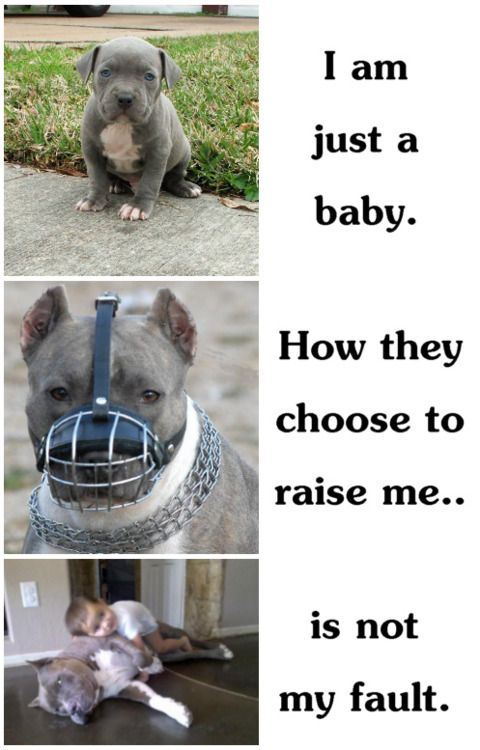 People need facts & education about Pitbulls. Dobermans and Rottweilers have been through the same bias. It is NOT the breed's fault. It's the fault of IRRESPONSIBLE owners who train and breed them to feed their aggressions.   ...........click here to find out more     http://kok.googydog.com