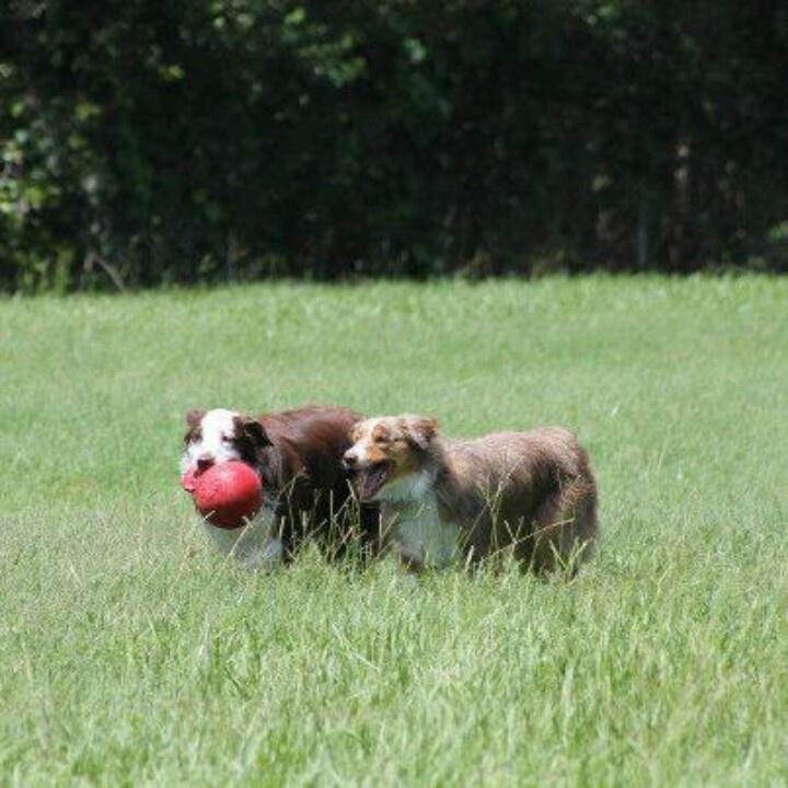 8 best jacksonville fl dogwood off leash dog park images on bella austin lovin some fun at dogwood dog park jacksonville fl solutioingenieria Choice Image