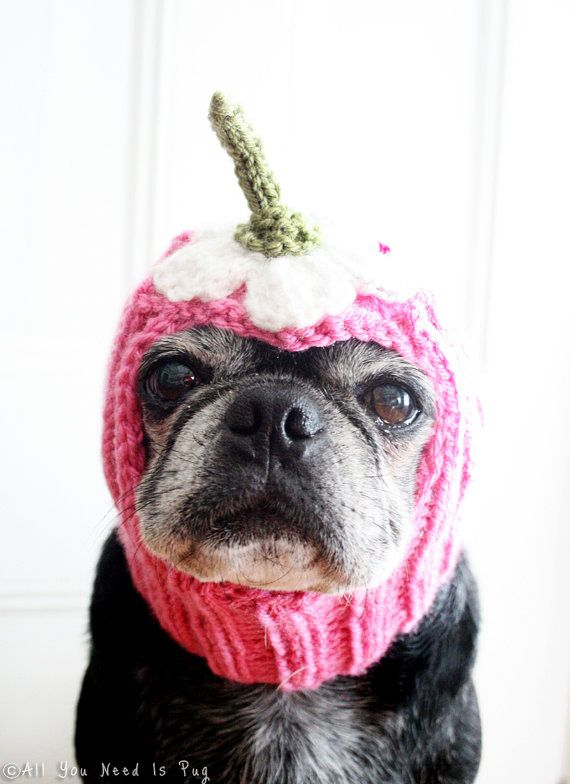The Upside-Down Daisy Hat is our spin on the crazy daisy craze of spring. Pretty and petite, this hat is the perfect accessory for little lady dogs everywhere!  The hat features an upside-down white daisy with its green stem on top. Your dogs hat will be custom made to fit his or her unique measurements, and in the colors of your choosing. I you would like to see a chart of our available yarn colors, please message us.  ------------------------------------------- IMPORTANT NOTES:  • This…