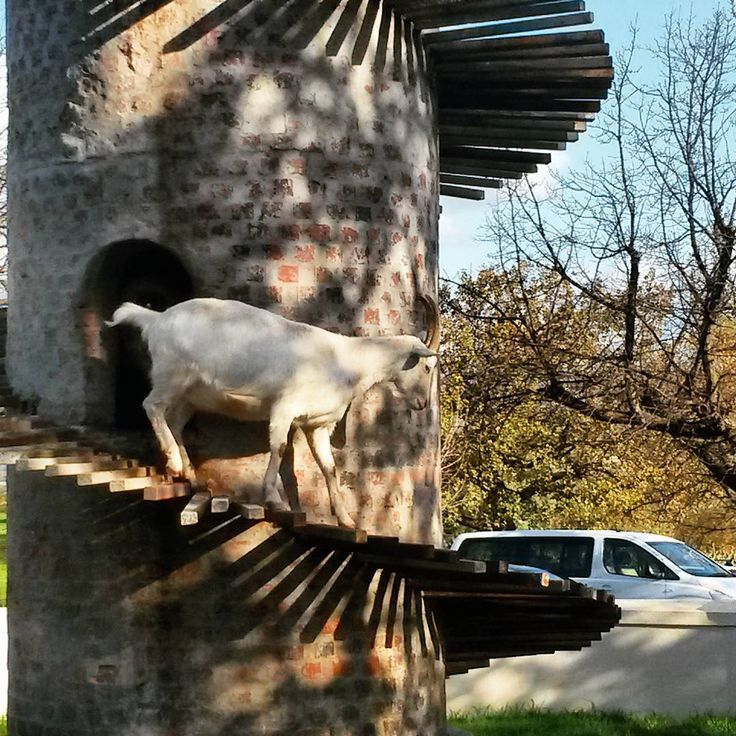 While at Fairview it's almost a crime to miss popping round to see the resident goats hanging out at the famed goat tower.