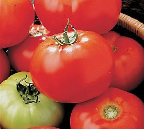 plant recommendations - Which tomatoes grow the best in ...