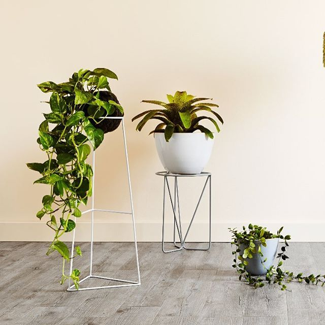 Ivy Muse | 'Arrow' in White | 'Chrysalis' in limited edition Frost | 'Nightshade Pot' in Ice Blue | a few pieces from our popular NIGHTSHADE collection, still available online and in-store now. Photo: @annetteobrien Styling: @huntandbow #ivymuse #devilsivy #bromeliad #hoya