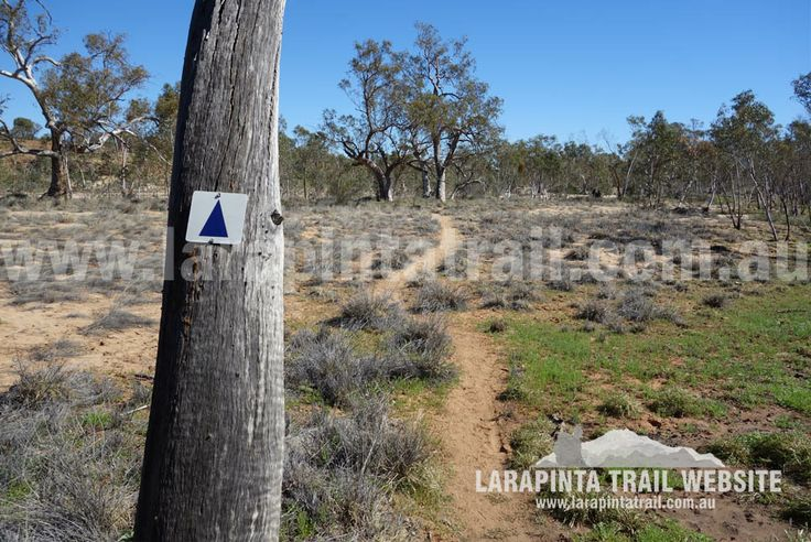 Vicinity of Finke River flats. Typical country around this area. © Explorers Australia Pty Ltd 2014