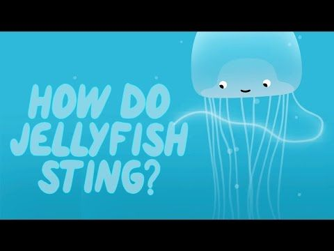 You're swimming in the ocean when something brushes your leg. When the  tingling sets in, you realize you've been stung by a jellyfish. How do  these beautiful gelatinous creatures pack such a painful punch? Neosha S  Kashef details the science behind the sting.