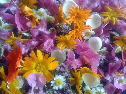 Sinnliche Blütenvielfalt