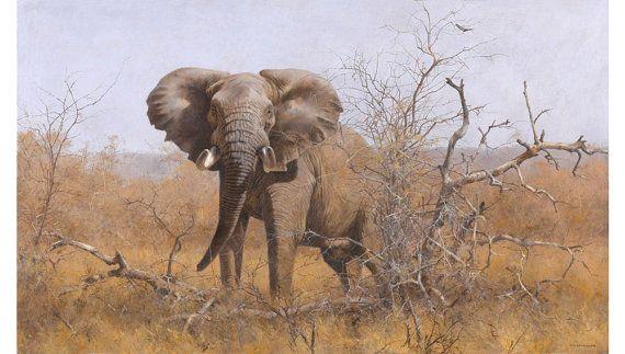Elephant Art Print  Tusker Territory by Kim by KDGartprints