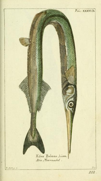 Bd 5 plates (1784) - Biodiversity Heritage Library #nature #fish #scientific #illustration