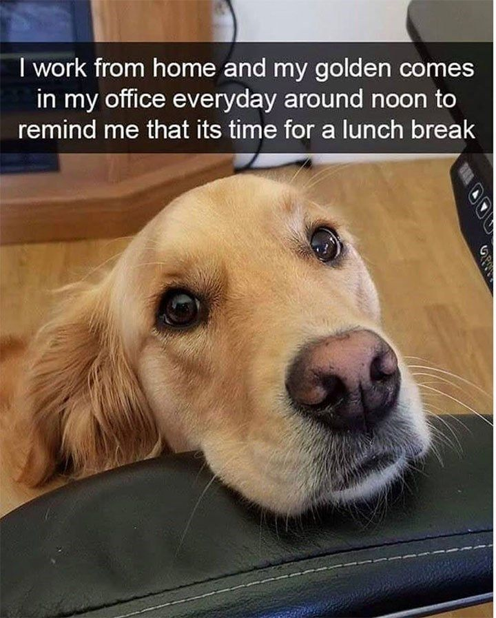 Work Snitch Dog Meme