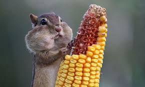 """Résultat de recherche d'images pour """"animal mangeant"""""""