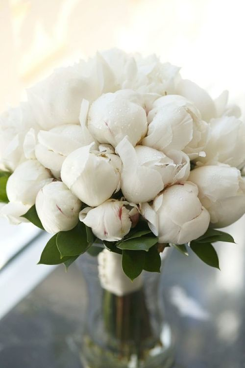 White peonies, hand tied with satin ribbon.