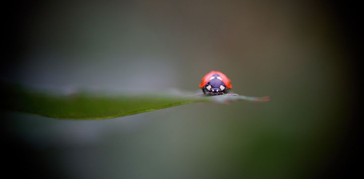 Photographer Pernille Westh | Ladybird on leaf · Get my 7 FREE basic photography tips - you need to know! http://pw5383.wixsite.com/free-photo-tips