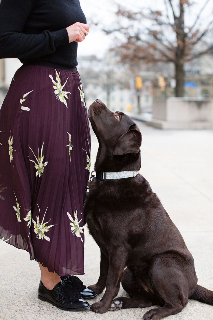 1214 Best Chocolate Labs Images On Pinterest Adorable