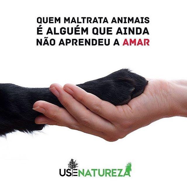 PURA VERDADE! #cachorro #cachorros #cachorroterapia #caopanheiro #cachorroetudodebom #bulldog #luludapomerania #schnauzer #pug #maltes #pug #viralata #petmeupet #maedecachorro #maedegatos #paidegatos #paidecachorro #gato #filhode4patas #amoanimais #direitoanimal #euprotejo #euamo