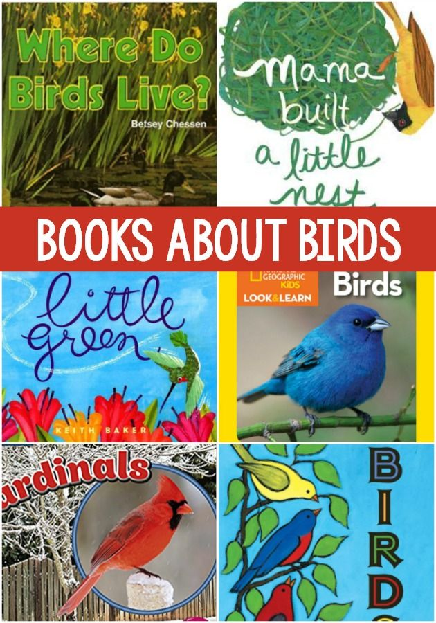 Books About Birds for Preschool. The best books for teaching and learning about birds in your preschool or kindergarten classroom. Perfect for spring! #preschool