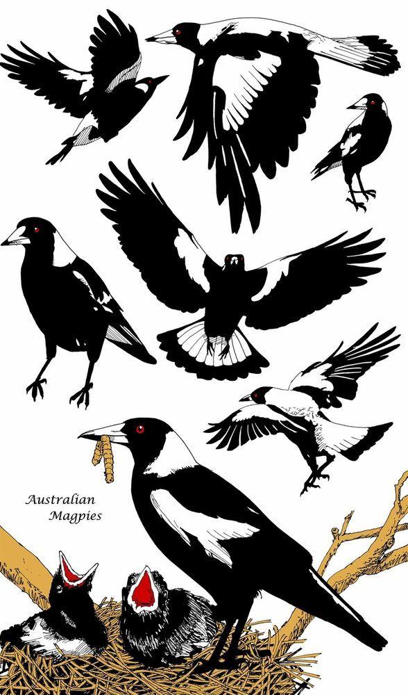 "Australian Designed ""Australian Magpie"" Cotton Bird Tea Towel - Striking Design | Collectables, Animals | eBay!"