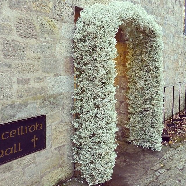 Baby's breath arch, vintage , rustic and wintry
