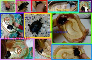 La piccola tartaruga asilo nido contatto con la natura, amare gli animali, scoperta esperienza bambini