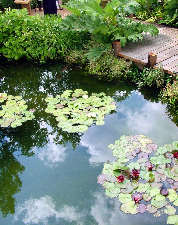 Plants for the koi pond cutenature pinterest plants for Koi pond water murky