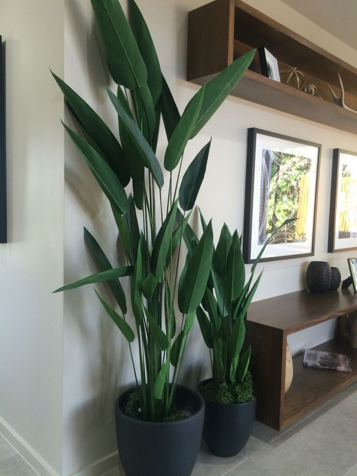 Zimmerpflanzen – Eingangshalle?   – Pflanzen Drinnen
