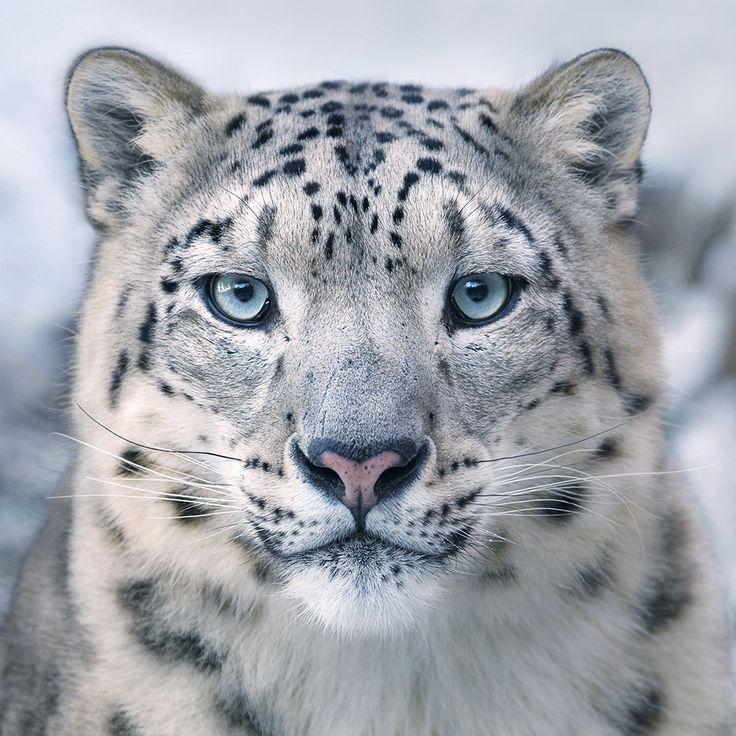Triste et beau : Ce photographe compile patiemment pendant des années des portraits bouleversants d'espèces animales bientôt éteintes