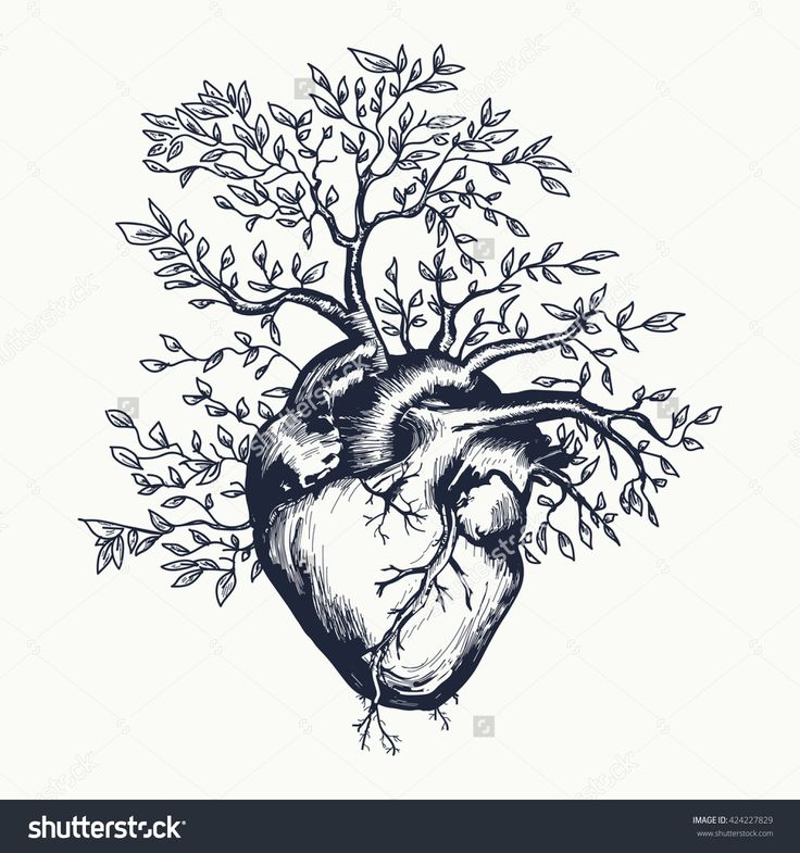 https://www.shutterstock.com/fr/pic-424227829/stock-vector-anatomical-human-heart-from-which-the-tree-grows-heart-tattoo-art-vector-illustration.html?src=1VeVPET54mt3K1VTGn-Gcg-1-11