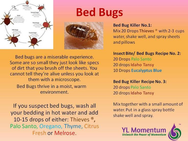 Young Living Essential Oils for Bed Bugs To order any young living product please contact Angiemac76@youngliving.org or  https://www.youngliving.org/angiemac76  and please LIKE us on Facebook https://www.facebook.com/angiesyloils