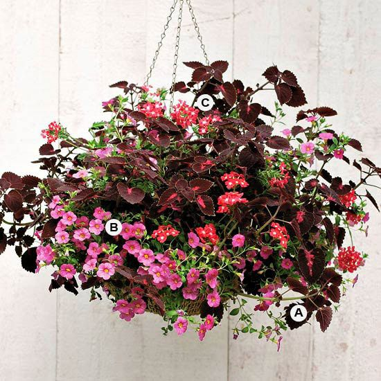 Hanging Flower Baskets In Full Sun : Images about suspensions florales on