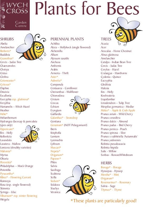 Current farming practices leave bees without enough food year round. Help give bees something to thrive on and plant some of these.