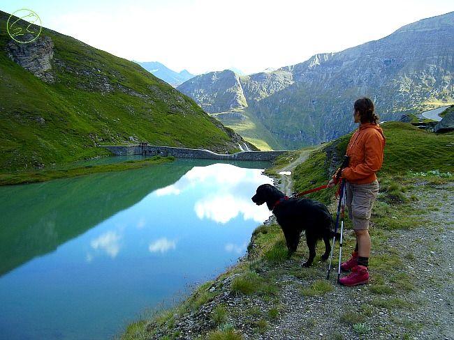 trekking with dog