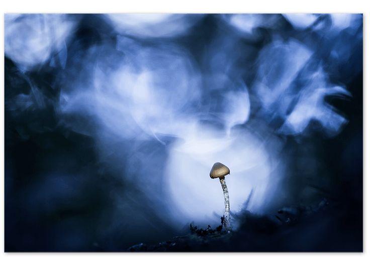 Stage Macro - Photo Nature - Fabien Dubessy