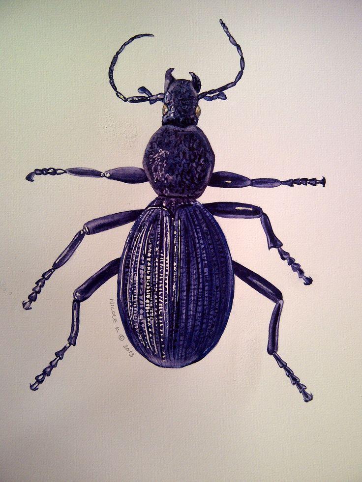 Nicole Kretzchmars Blister Beetle