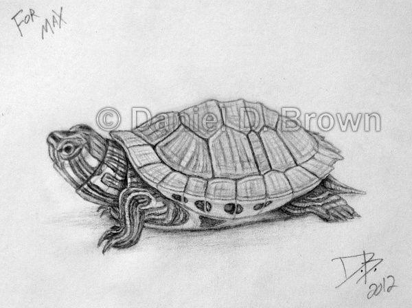 turtle Pencil Drawing slider | Baby Red-Eared Slider Turtle, Daniel D. Brown, 2012, Pencil