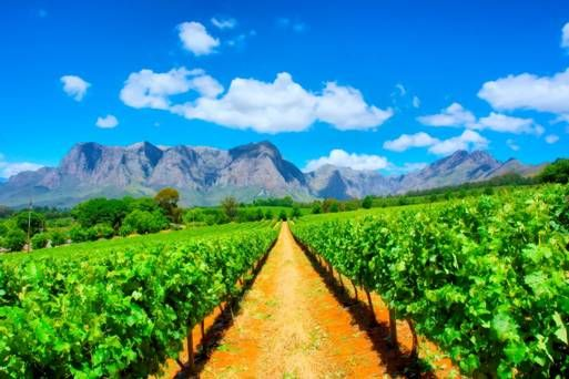 Wine: King of the Cape In South Africa, Cabernet Sauvignon is the uncrowned king of the Cape. #capetowndrink http://rock.ly/gzx1y