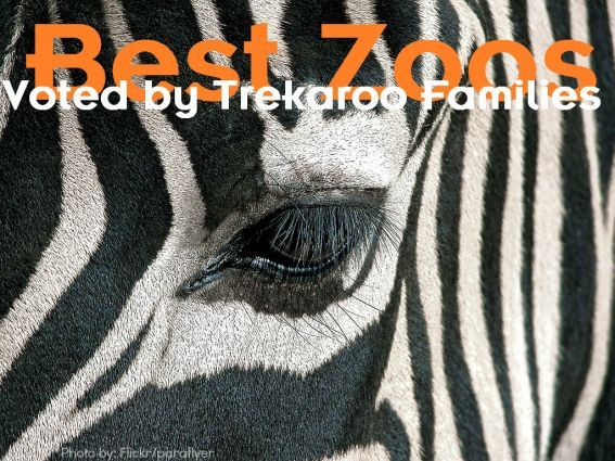The Best Zoos in the United States as Voted by Trekaroo Families!
