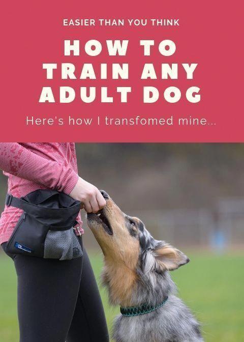 Develops Your Dog S Hidden Intelligence To Eliminate Bad