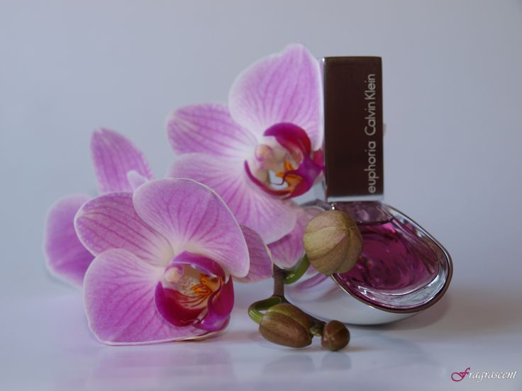 Calvin Klein Euphoria- perfume review on fragrascent.pl #calvinklein #euphoria #perfume #fragrance #review #beauty #scent #perfumy #flakon #perfume_bottle #orchid #orchidea #storczyk #pink