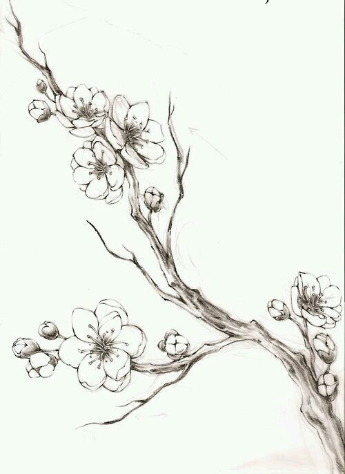 Kirschblütenzweig – #cherryblossom #Kirschblütenzweig – Kochen