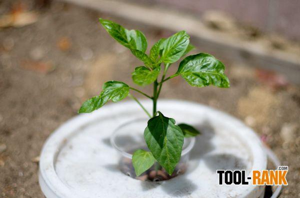 Kratky Methodu İle Hidroponik Domates ve Bitki Yetiştiriciliği ~ Yeşil Parmak