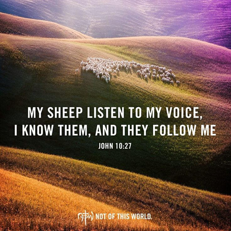 sheep springs catholic girl personals Favorite this post sep 29 sheep feeders (fremont) pic map hide this posting restore restore this posting $22500 favorite this post sep 29 1666 ih combine $22500 pic map hide this posting restore restore this posting.