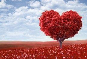 фотошоп, природа, дерево, форма сердца, небо, облака, красный фон, цветы