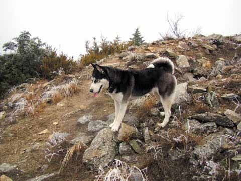 Непотерянный рай. Собаки тайги.  Сибирь и охота - понятия неразделимые. Люди, населяющие огромные таёжные пространства, не могли жить без промысла. А его результат часто зависел от хорошей с...